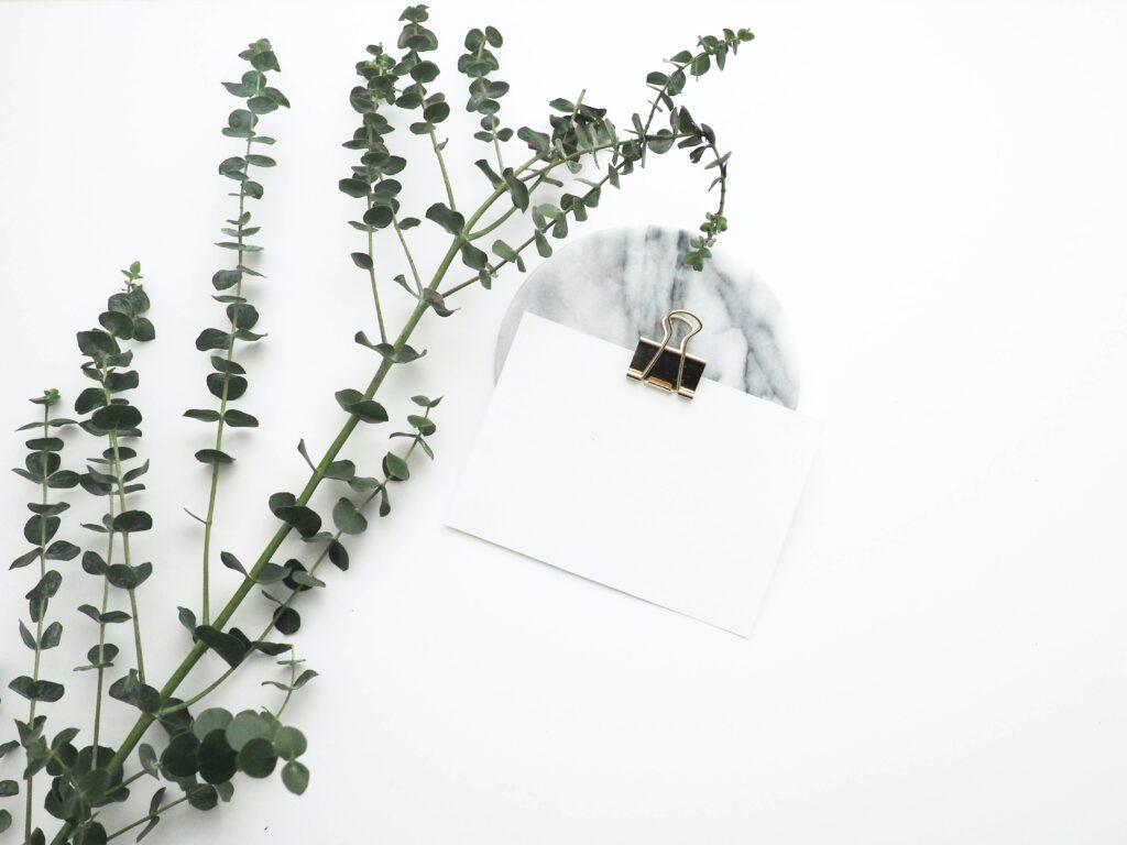 Hoja de papel que se utilizará para la creación de una marca comercial en línea, al lado de una planta.